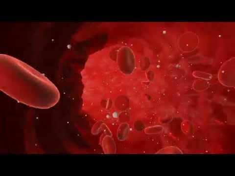 3D Blood Vessel Flow