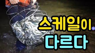 스케일이 다르다 #생활의달인 #투망달인 #전어투망  #Cast net fishing #sea fishing