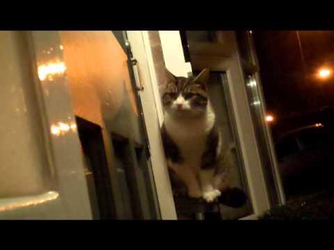 Cat Knocking Front Door