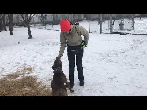 Circus A194418 Loves the Snow!!