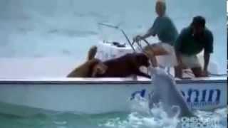 дельфин и собака любовь