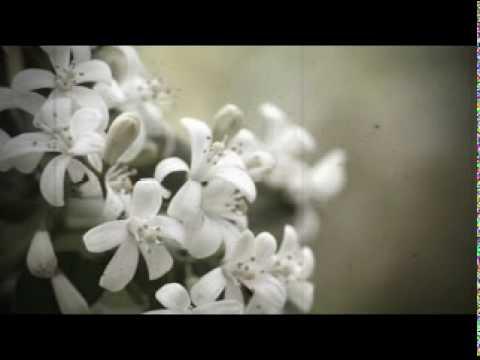 Giot le hoa hong - Tong Gia Vy