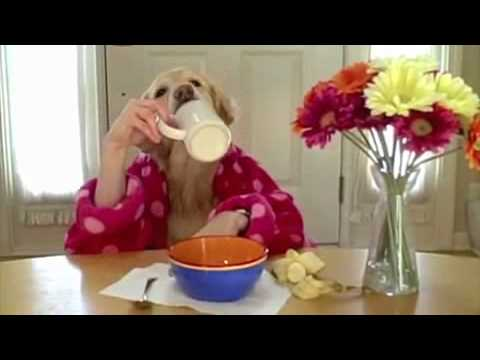 La colazione dei cani video divertenti youtube for Youtube cani