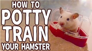 � How to Potty Train Your Hamster �