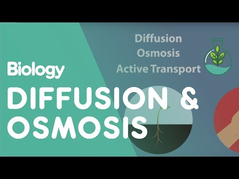Transport in Cells: Diffusion and Osmosis  Biology for All  FuseSchool
