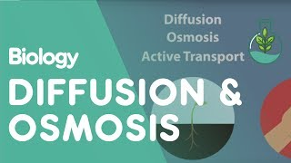 Transport in Cells: Diffusion and Osmosis | Cells | Biology | FuseSchool