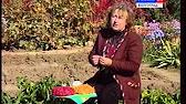 Лук-севок купить семена с доставкой почтой по всей украине. Каталог семян и саженцев 'сельский вестник'.