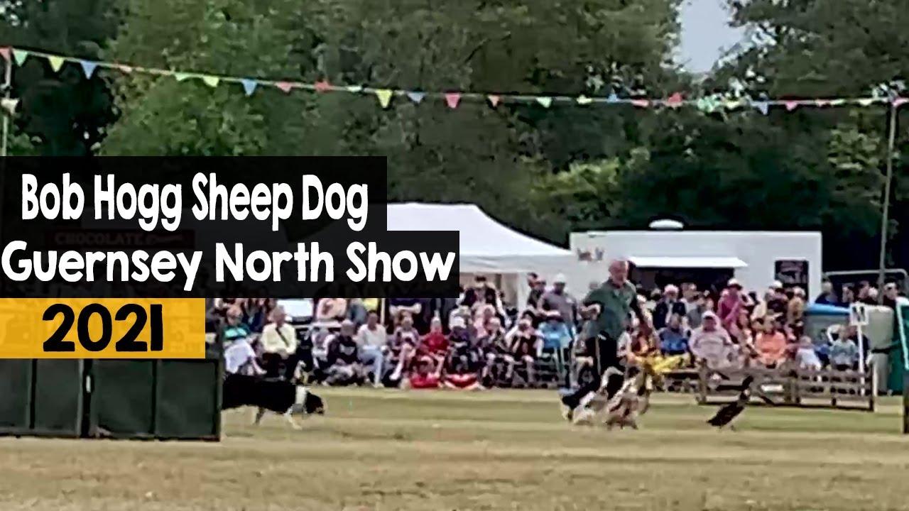 Bob Hogg Sheep Dog Display