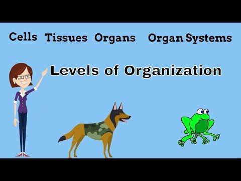 Cells Tissues Organs Organ Systems