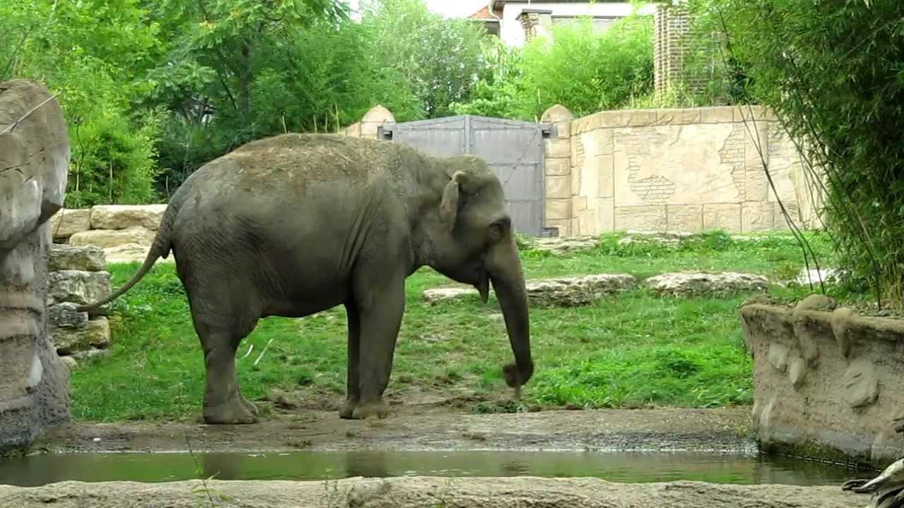 Zoo Pro7