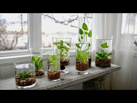 How to Make an Indoor Water Garden! 🌿💦 // Garden Answer