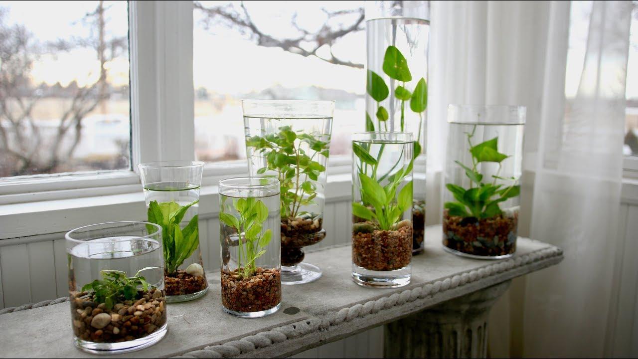 make indoor water garden