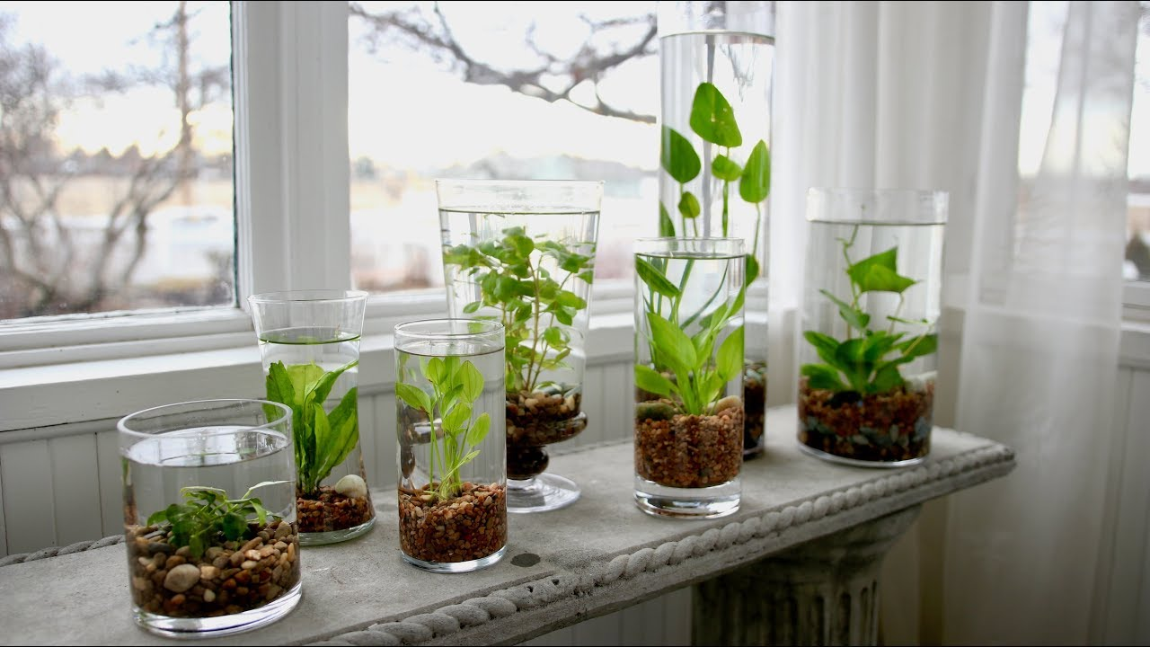 How to Make an Indoor Water Garden 🌿💦 // Garden Answer