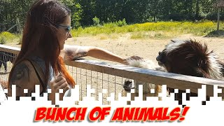Bunch Of Animals! (A Blog In Which The Postings Are Primarily In Video Form)