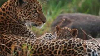 Animals & their babies