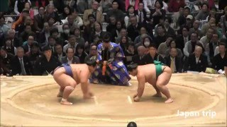 琴奨菊 vs 嘉風の取組。 2016大相撲春場所2日目。