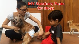 Download Video Anjing pakai pampers | Dog on her period MP3 3GP MP4