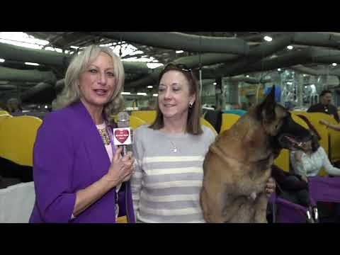 2019 Westminster Kennel Club Dog Show Meet and Greet