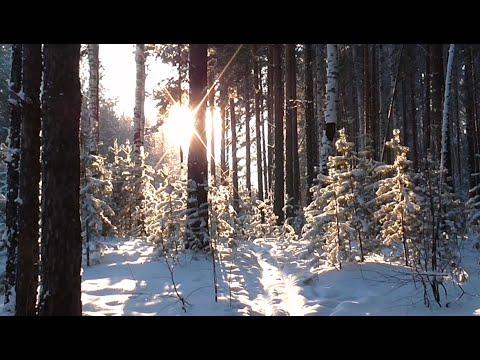 Звуки природы 6. Зима. Зимний лес