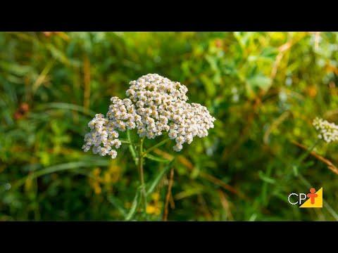 Curso Plantas Medicinais e Aromáticas - Produção de Mudas