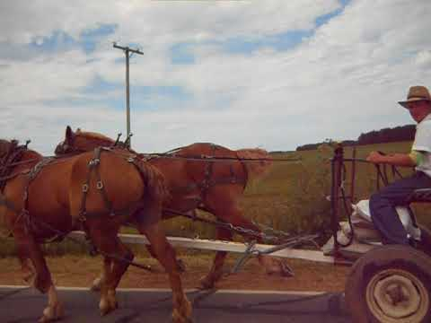 2 Horse Power Amish Buggy - Belgian Horses!!