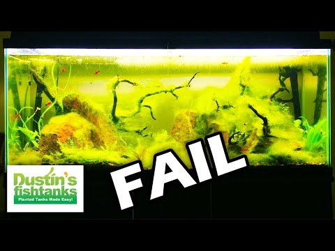 NO FILTER On FAIL! No Maintenence Fishtank FAIL part 2
