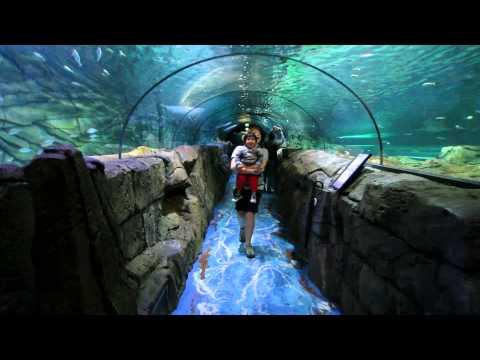 Sealife Sydney Aquarium II | Visit Sydney 2013