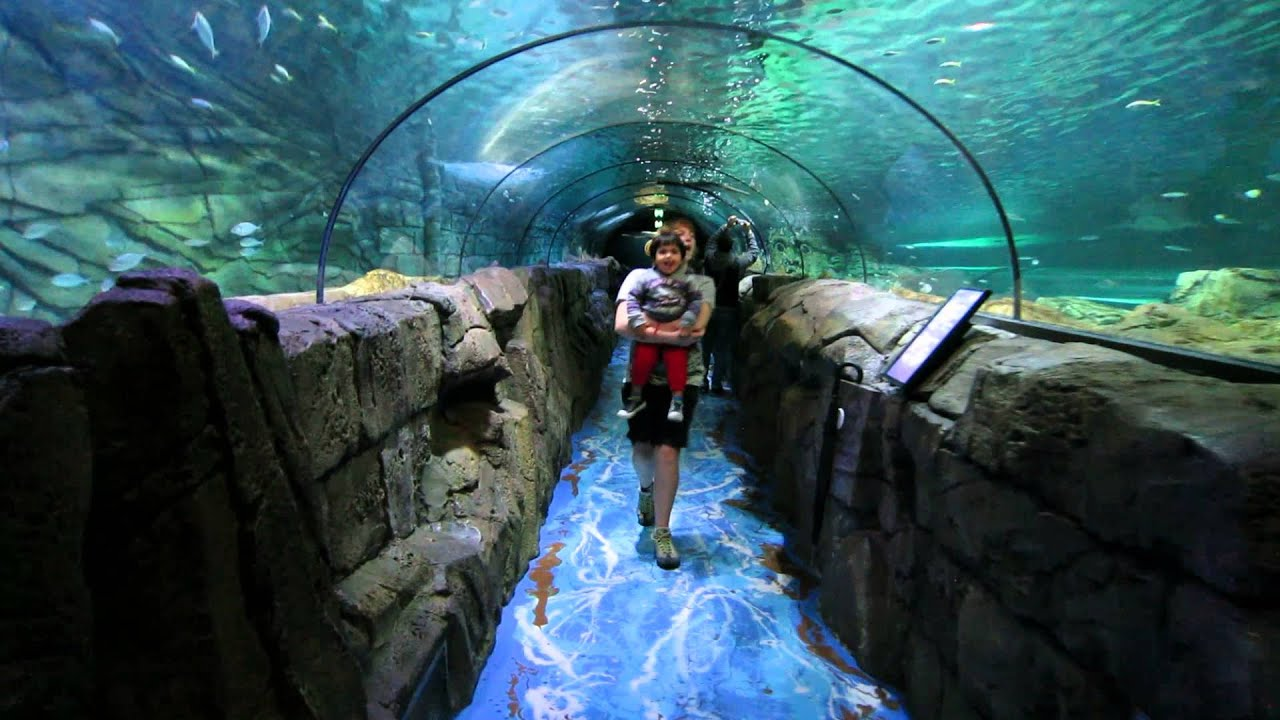 sealife sydney aquarium ii visit sydney 2013 youtube