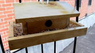 Diy Birdhouse, Decor It Yourself
