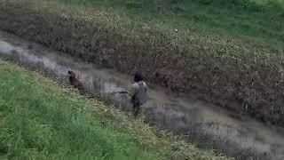 Охота в Италии с собакой.