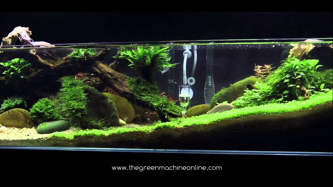 Tributary Aquascape By James Findley Youtube