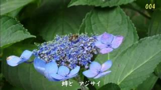 2017.07.27 青葉の森公園から thumbnail