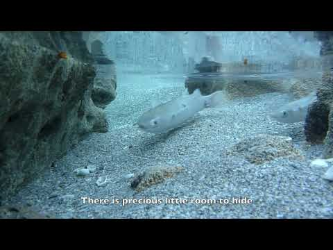 Thumbnail: October 24, 2009: Life and Death in the Tidal Pools of Coral Cove