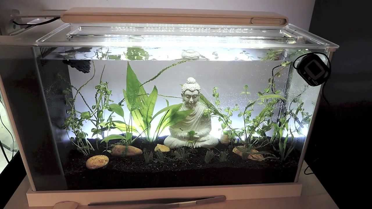 5 gallon fish tank reviews fluval spec 5 gallon for Fish tank review