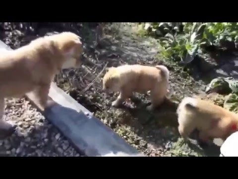 Funny Videos Dog - Best Funny dogs vines
