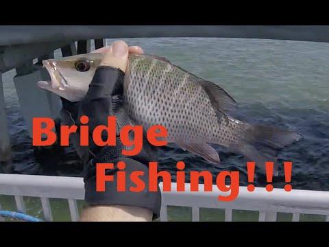 Bridge Fishing?!?! In The Florida Keys