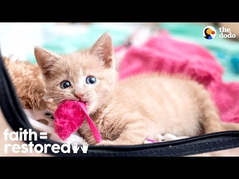 Woman Rescues Paralyzed Kittens And Finds Them Homes | The Dodo Faith = Restored