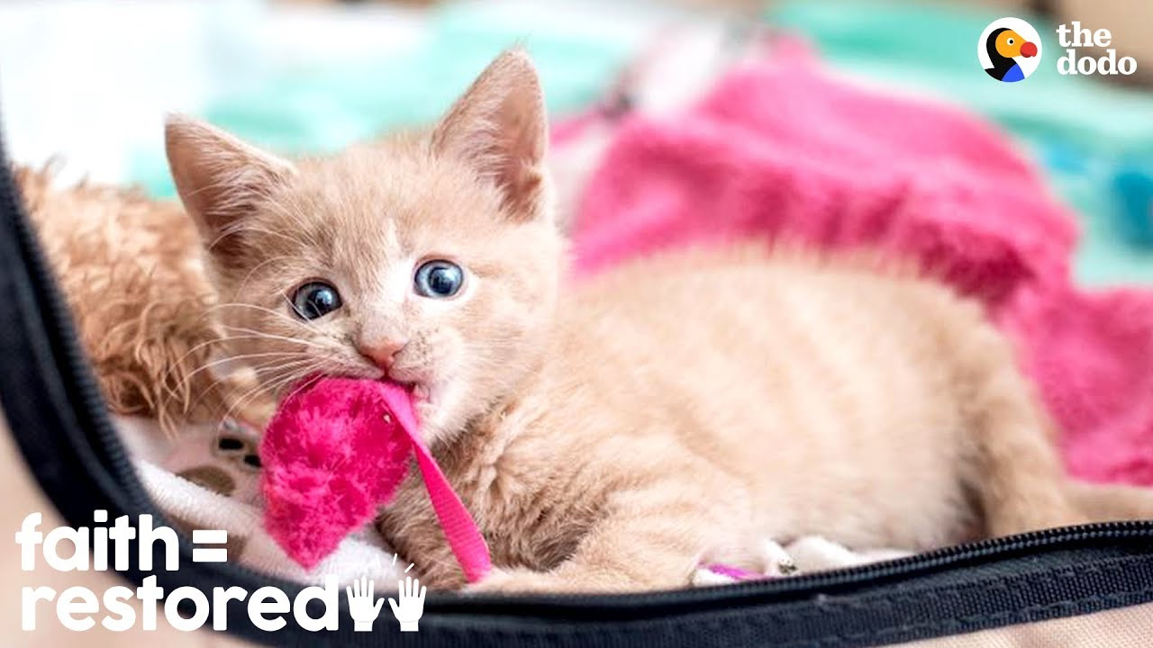woman-rescues-paralyzed-kittens-and-finds-them-homes-the-dodo-faith-restored