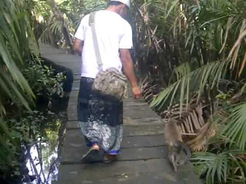 Full Download Monyet Monyet Liar Tetapi Jinak