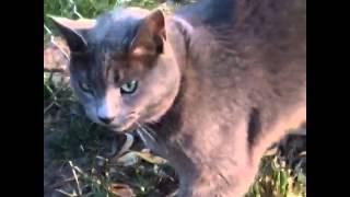 Honking kitty
