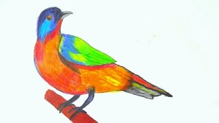 🔴 how to draw a birds, painted bunting bird drawing with pencil