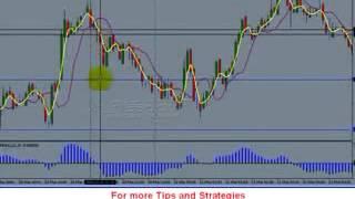 Xforex - Stop Loss - Learn Tips_002