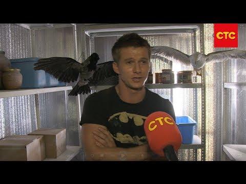 Сериал Воронины 1 сезон 1 серия смотреть онлайн бесплатно