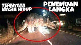DInosaurus Nyata.. keren bray