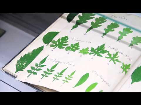 Antiquariat Botanicum at the California International Antiquarian Book Fair