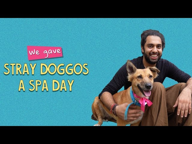 ScoopWhoop: We Gave Stray Doggos A Spa Day