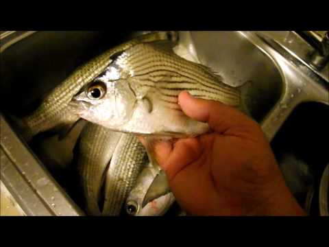 Multi species fishing ft myers florida doovi for Best florida fish to eat