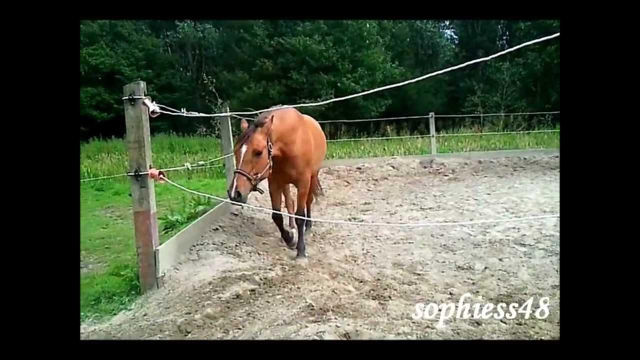 Funny horse bloopers - paarden bloopers (HD)