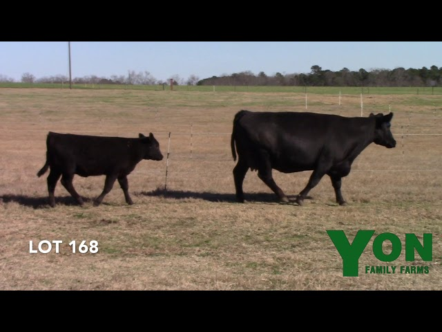 Yon Family Farms Lot 168
