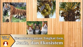 Kelas 10 - Biologi - Keanekaragaman Tingkat Gen, Jenis, dan Ekosistem | Video Pendidikan Indonesia